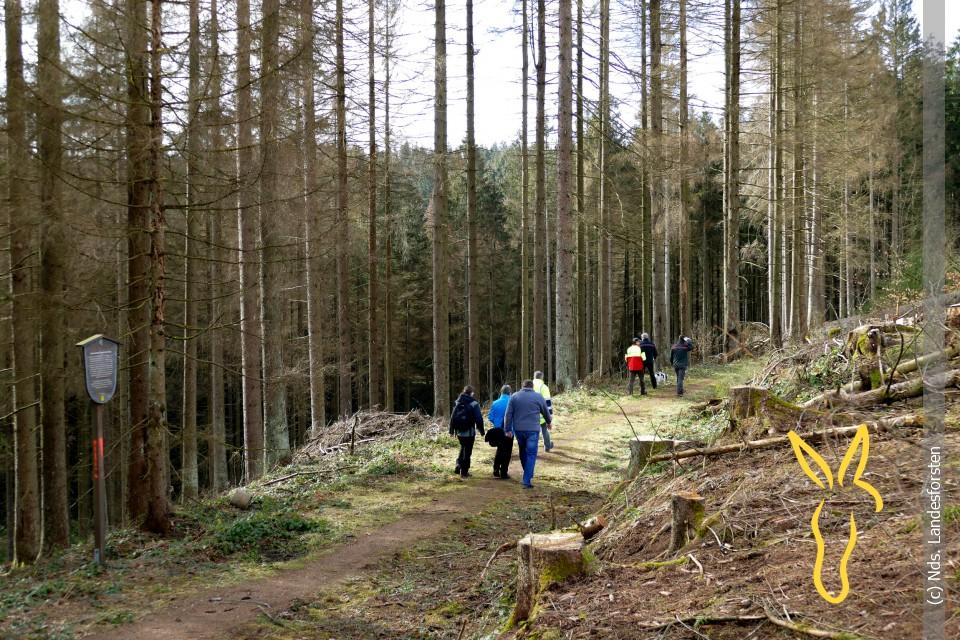 Faltbare Trekkingst/öck Wsobue Wanderst/öcke Senioren-Trekking Wandern Verstellbar Nordic Walking Stock Teleskopst/öcke f/ür M/änner und Frauen Gehen